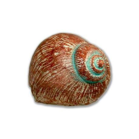 Cache Escargot