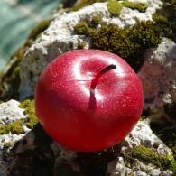 Cache Pomme