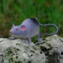 Cache Rat gris