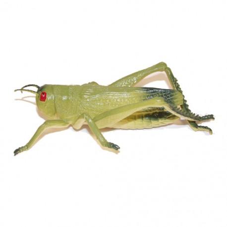 """Cache """"Créature"""" Insecte - Grosse Sauterelle"""