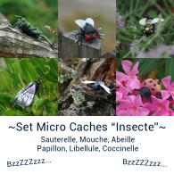 "Set Micro Caches ""Insecte"""