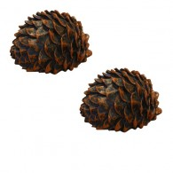 "Small Cache ""Pomme de pin"" - Lot de 2"