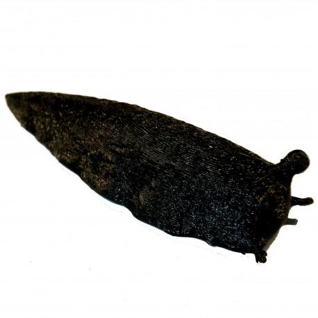Geocache Limace Magnétique - Noir