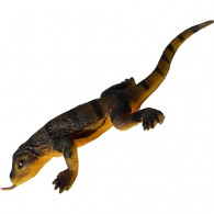 Cache Dragon de Komodo