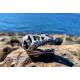 T-Rex Head 3D Geocoin - Antique Silver (Édition Limitée)